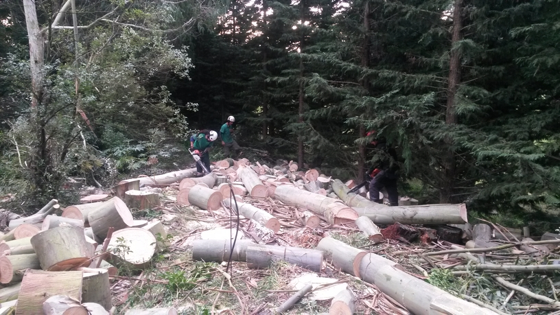 Hollands Tree Services